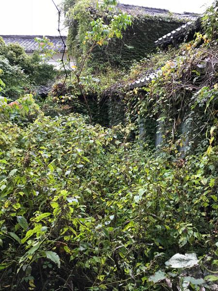 草木生い茂った庭