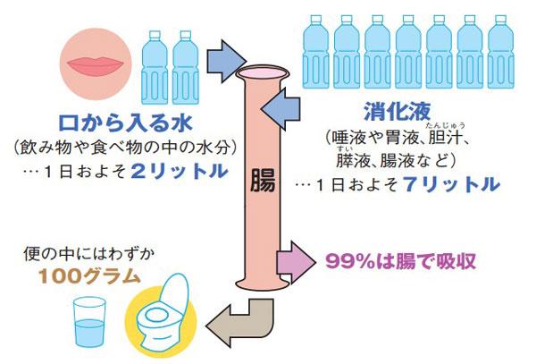 腸内の水分出納バランス